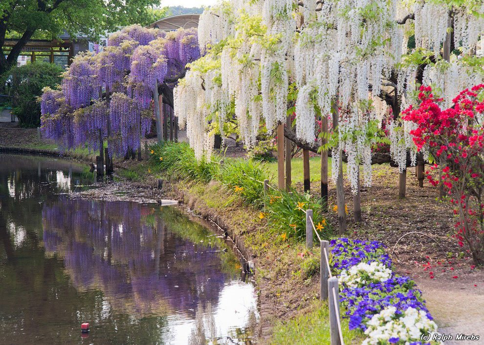 Ashikaga Lillepark