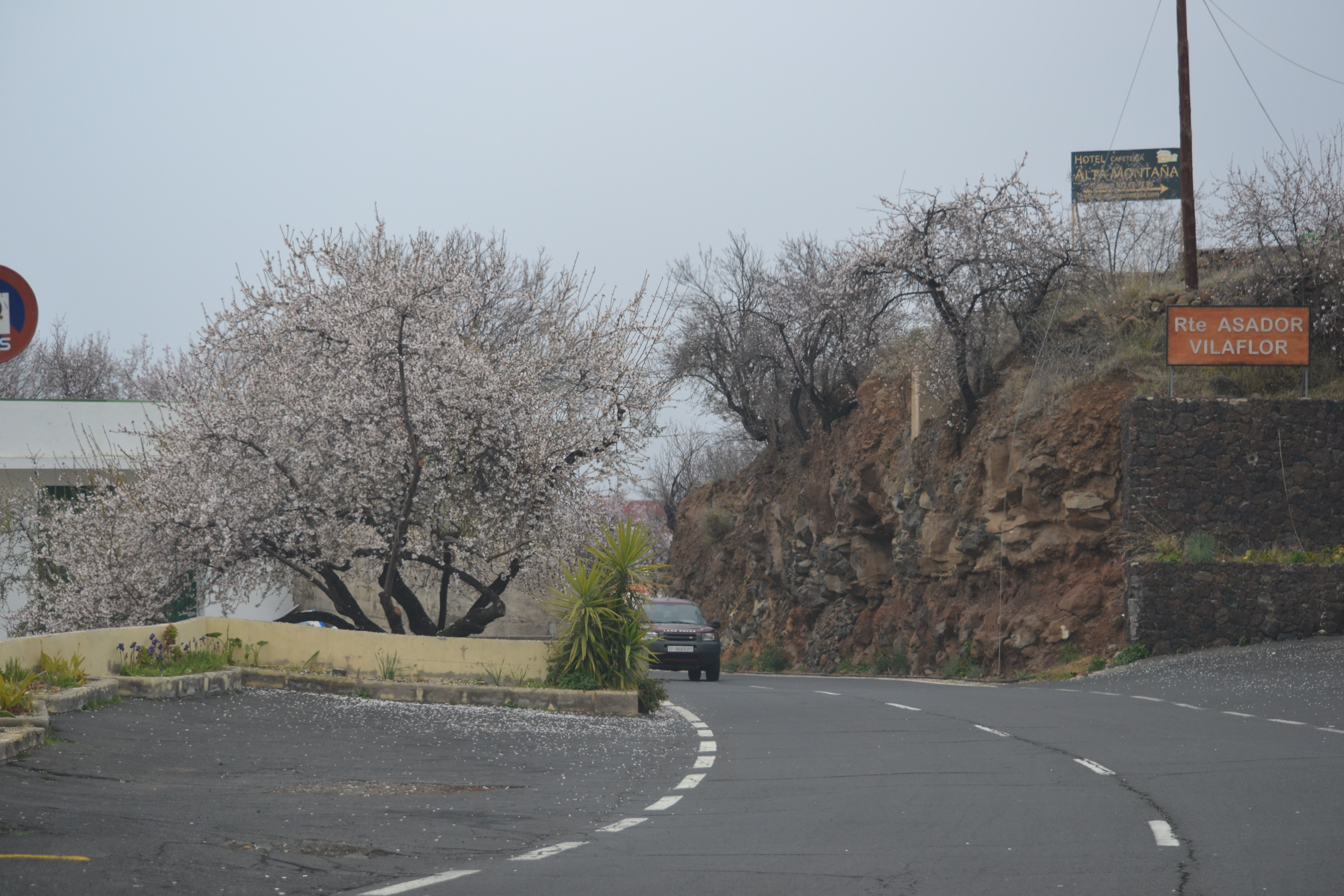 Tenerife kevad