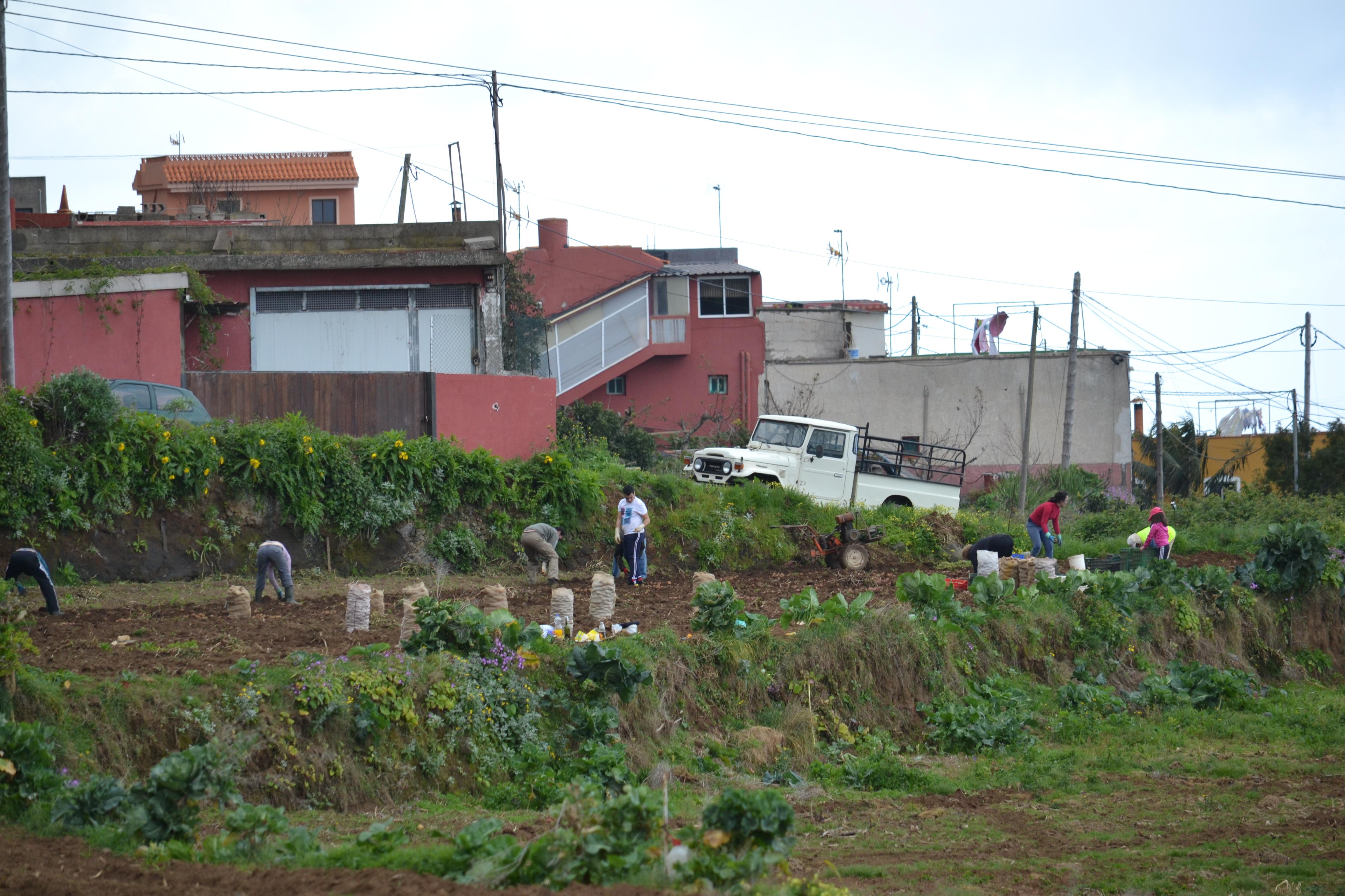 Tenerife kevad - kartulipanek