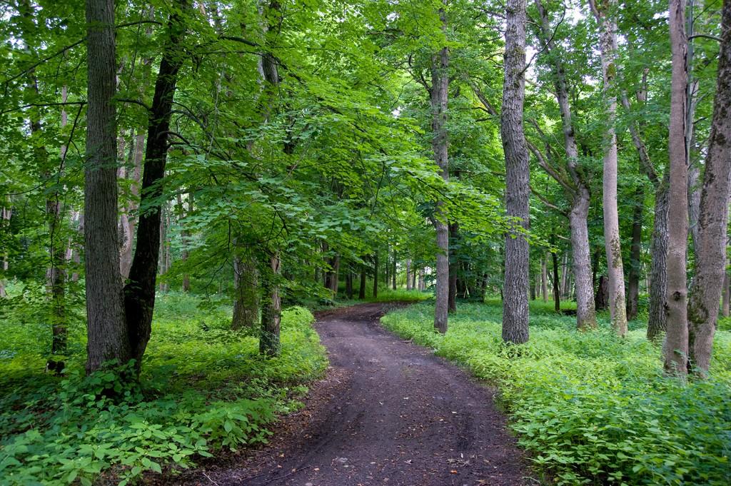 harku_metsa_loodusrada_m6isa_park