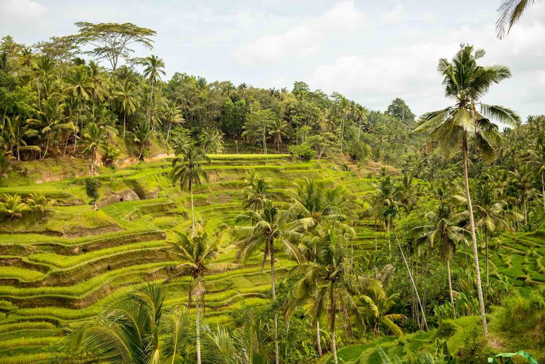 Bali saar Indoneesia