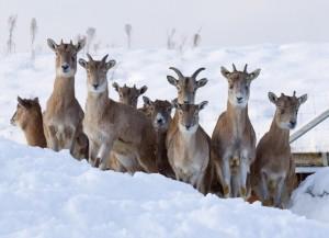 Loomaaed talvel