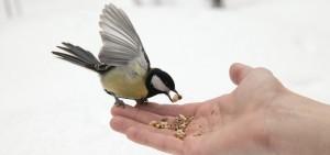 toida linde