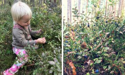 parimad seenemetsad marjametsad eestis